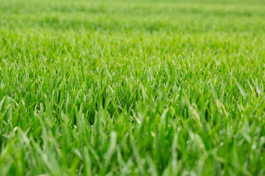 Muru rajamine - Посевной газон
